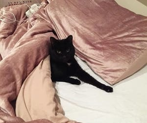 aesthetic, bed, and black cat image