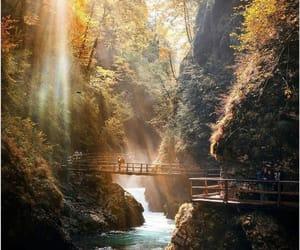 autumn, belleza, and luz image