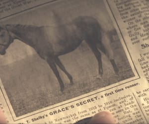 animal, horse, and newspaper image