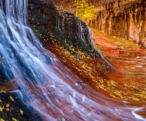 zion national park, colorful, and fall image