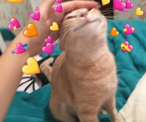 cats, heart, and meme image