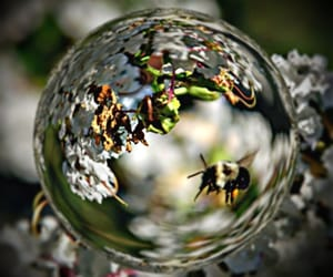 beauty, bees, and fisheye image
