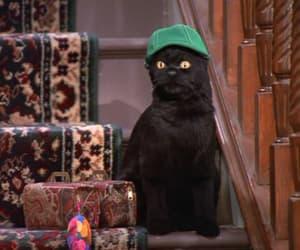 90s, black cat, and cat image