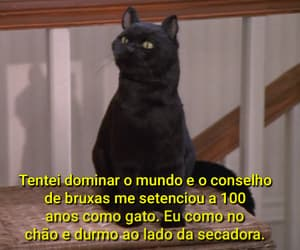 90s, gato, and 90s tv show image