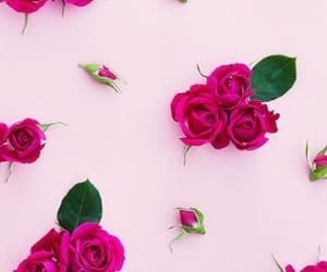 wallpaper, pink, and rose image