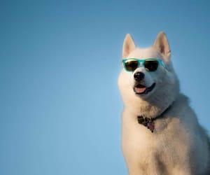 dog, shades, and sunglasses image