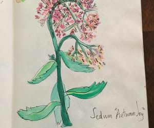 flower, painting, and sketch image