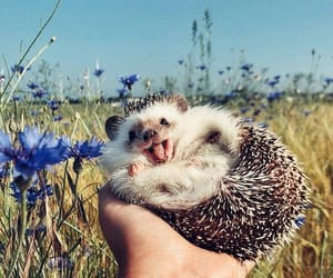 hedgehog, animals, and cute image