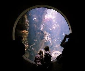 fish, aquarium, and water image