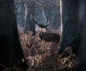 Image by Офели Осборн