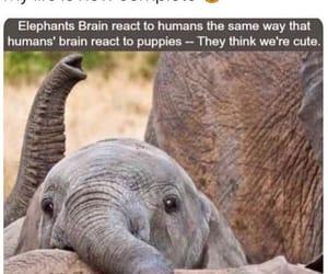 elephant, meme, and cute image