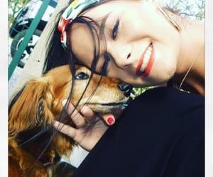 animals, dog, and headband image