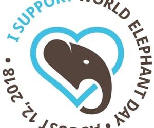 elefante, world elephant day, and elephant image
