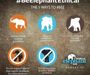 elefante, elephant, and world elephant day image