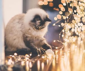 cat and christmas lights image