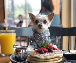 breakfast, dog, and juice image