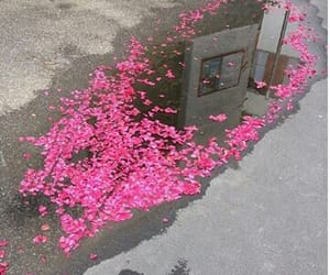 beauty, flowrs, and pink image