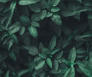 green, leaves, and wallpaper image