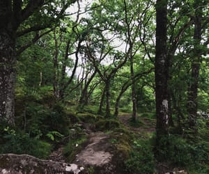 forest, pretty, and schottland image