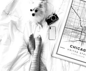 bed, dog, and pets image