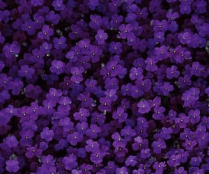 aesthetic, beautiful, and violettes image