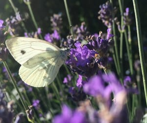 karma, summer, and schmetterling image