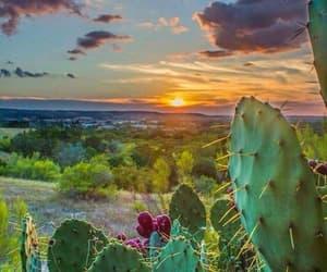 photo, travel, and kaktus image