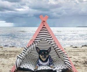 beach, ocean, and chihuahua image