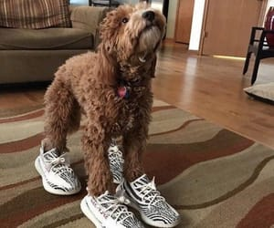 adidas, dogs, and fashion image