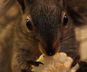 animals and squirrel image