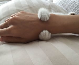 animal, fluffy, and arm image