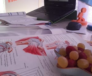 anatomy, demi lovato, and fruit image