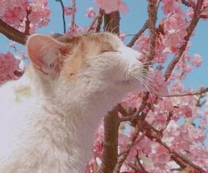 cat, nature, and sakura image