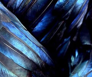 blue, gorgeous, and wings image
