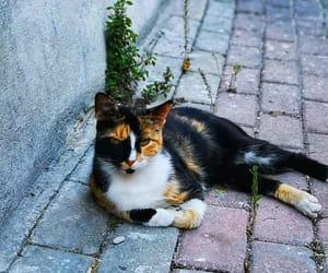 beautiful, cat, and capture image