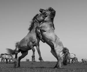 caballos and caballos salvajes image