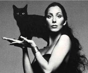cher, cher, and cat image