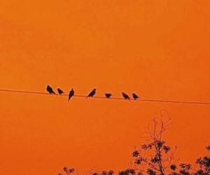 orange, bird, and aesthetic image