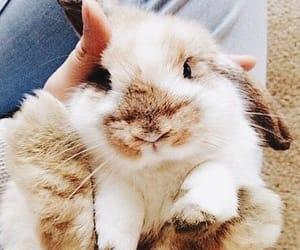 pet, rabbit, and cute image
