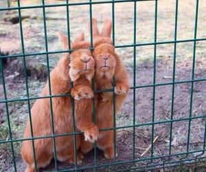 Animais, animal, and rabbits image