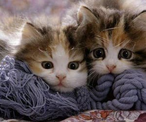 Animais, cat, and filhote image