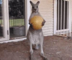 gif, playtime's over mofo, and kangeroo ball image