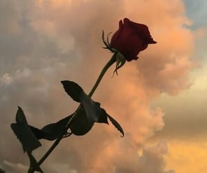 rose, sky, and flowers image