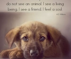 animals, veterinary, and love image