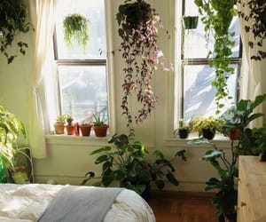 plants, bedroom, and green image
