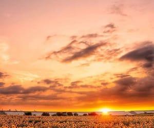 landscape, nature, and summer image
