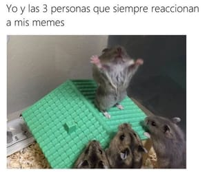 funny, meme, and divertido image