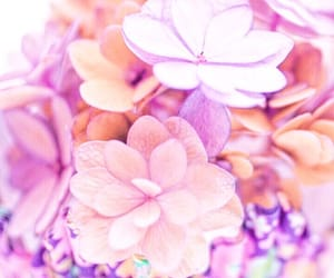 flowers, theme, and cute image