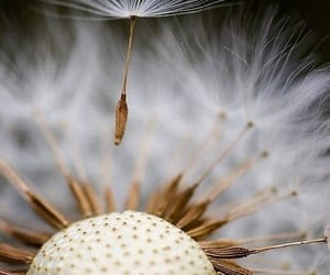 flowers, close-up photography, and seeds image