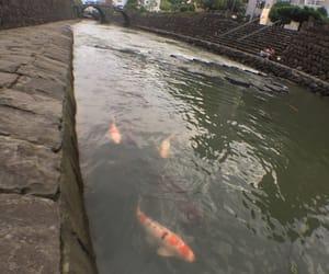 bridge, 鯉, and fish image